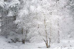 Een winters tafereel. Dwingelderveld, Drenthe.