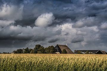 Maisveld en boerderij vlak onder Tzum in Friesland van Harrie Muis