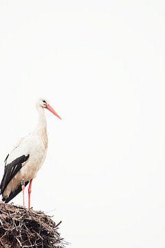 Ooievaar op nest van Erik Lei