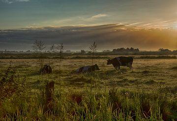 koeien in de wei van John Smits