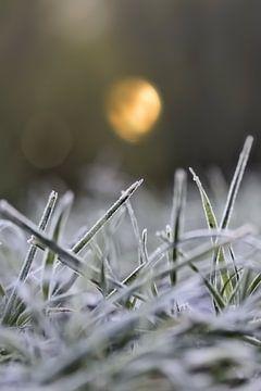 Bevroren gras van Niek Goossen