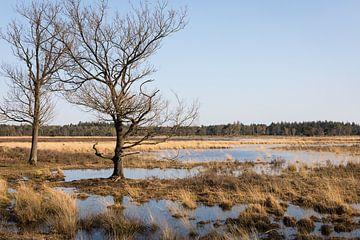 """Landschaft mit Moor """"strabrechtse heide"""" Abendlicht im Frühling von Ger Beekes"""