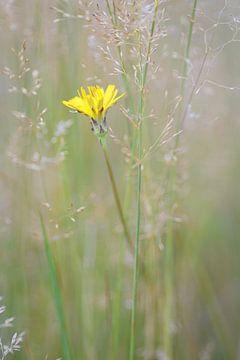 Gelb von Andy van der Steen - Fotografie