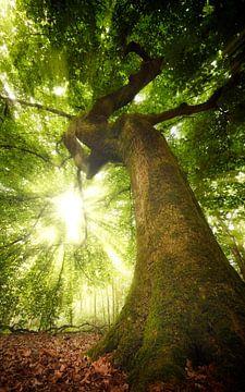 Die Natur gewinnt immer von Kees van Dongen