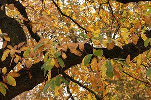 boom met herstbladeren