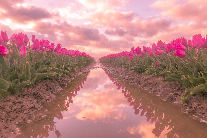 Hollandse Tulpen van AdV Photography