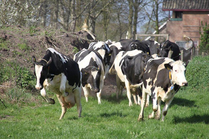 Happy Cows van Marcel van Rijn