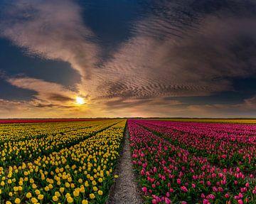 Les tulipes sur Texel - Grand mélange