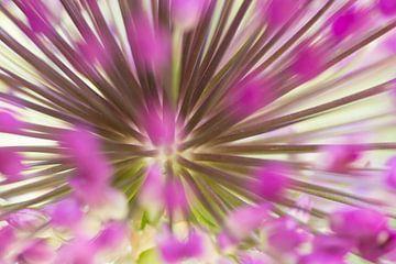 Close up van een bloem van de Allium van Birgitte Bergman