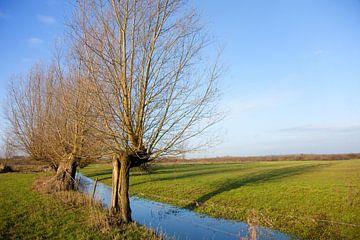 Kopfweiden in der Landschaft von Ivonne Wierink