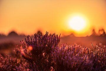 Heide bij zonsopgang van Richard de Bruin