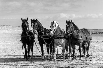 Pferde am Strand von Ameland von Evert Jan Luchies