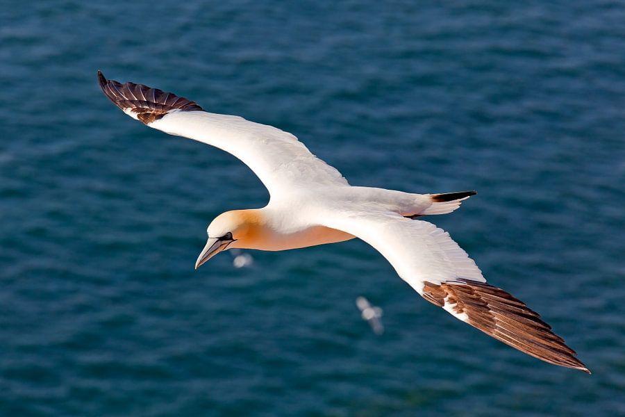 Jan van Gent in vogelvlucht van Anton de Zeeuw