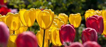 Rode en gele tulpen von Stefan Koeman
