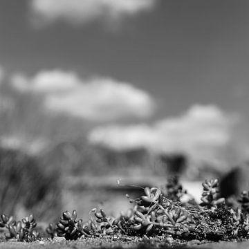 Gartenansicht von FRE.PIC