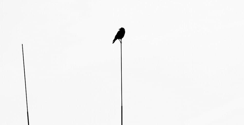 Crow van Anne Koop
