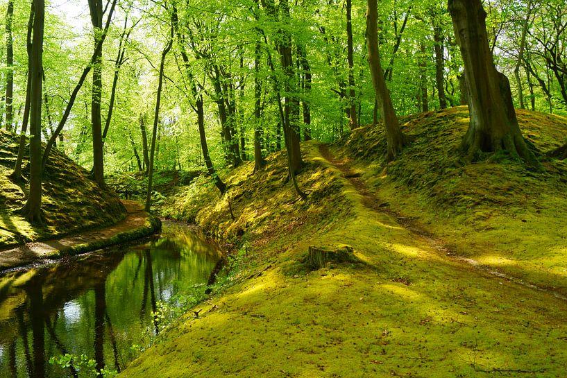Mos en fris groen in de lente op Landgoed Elswout van Michel van Kooten
