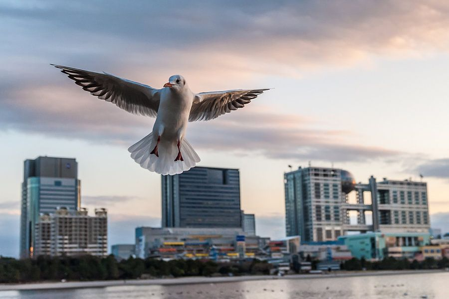 Odaiba Seagull van Aen Seavherne