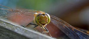 Hallo daar kleine libelle, het lijkt alsof je naar me lacht?