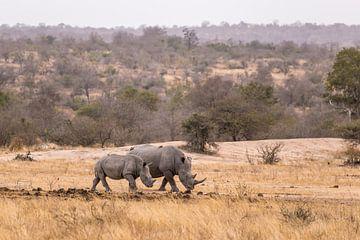 Rhino (3) sur