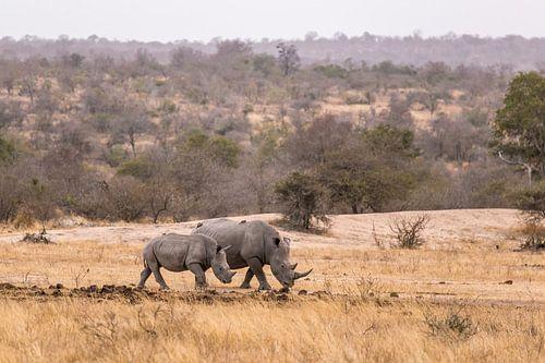 Rhino (3) von Mayra Pama-Luiten