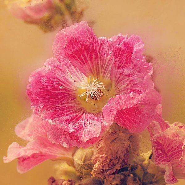 Oudroze bloem van Fotografie Jeronimo