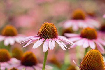 1 Blume von vielen von Anke Winters