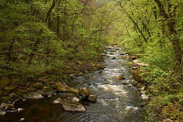 Frisches Frühlingsgrün bei Bode in Harz Bodetal von Cor de Hamer