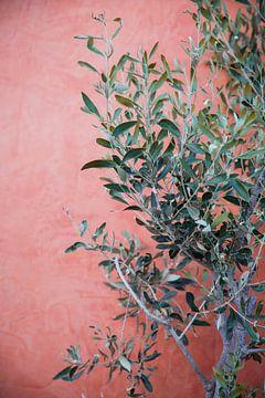 Olive tree Olijf boom straat beeld griekenland van shanine Roosingh