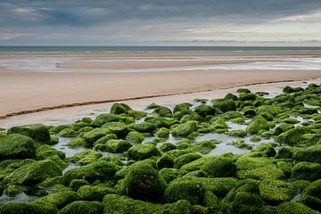 Green stones van