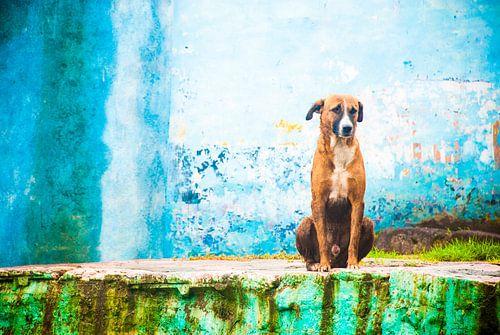 Hond, India van Joke Van Eeghem