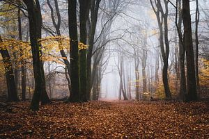Het oude bos van