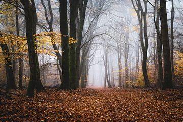 Der alte Wald von Tvurk Photography