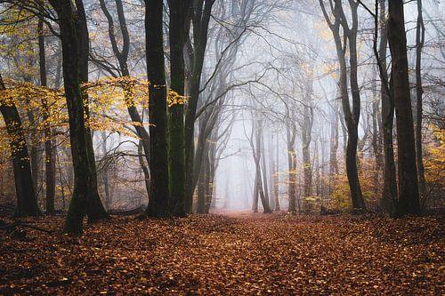 Het oude bos van Tvurk Photography