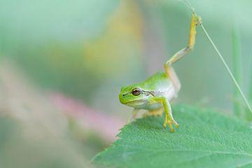 Yoga-Frosch von Larissa Rand