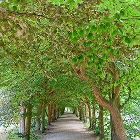 The Baarnse Bos - Romantic path sur Tamara Witjes