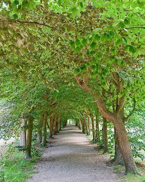 The Baarnse Bos - Romantic path