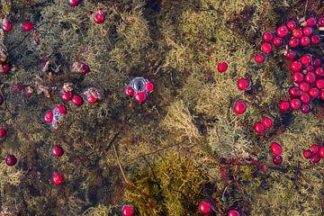 Drijvende Cranberries Vlieland III van Gerard Koster Joenje (Vlieland, Amsterdam & Lelystad in beeld)