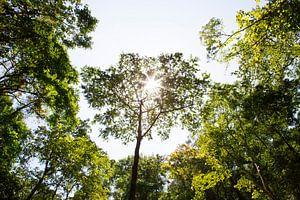 Bomen op Lombok Indonesië