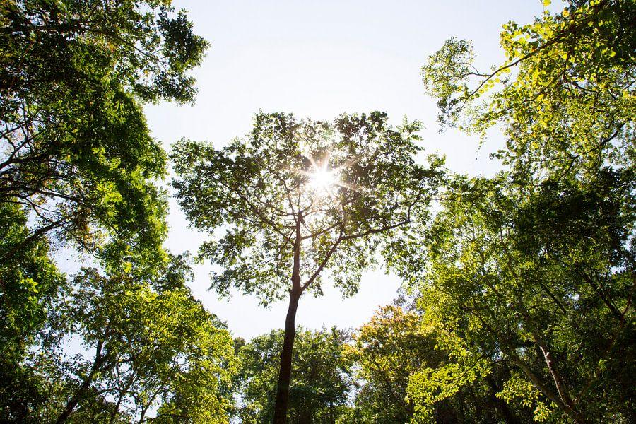 Bomen op Lombok Indonesië van Willem Vernes