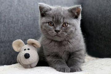 Danou die kleine Katze mit der Maus von Stefan teddynash