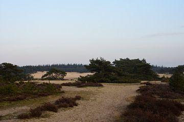 Op de grens van zand en heide van Gerard de Zwaan