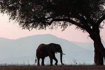 Olifant in Manapools (zimbabwe) von Gonda van Wijk