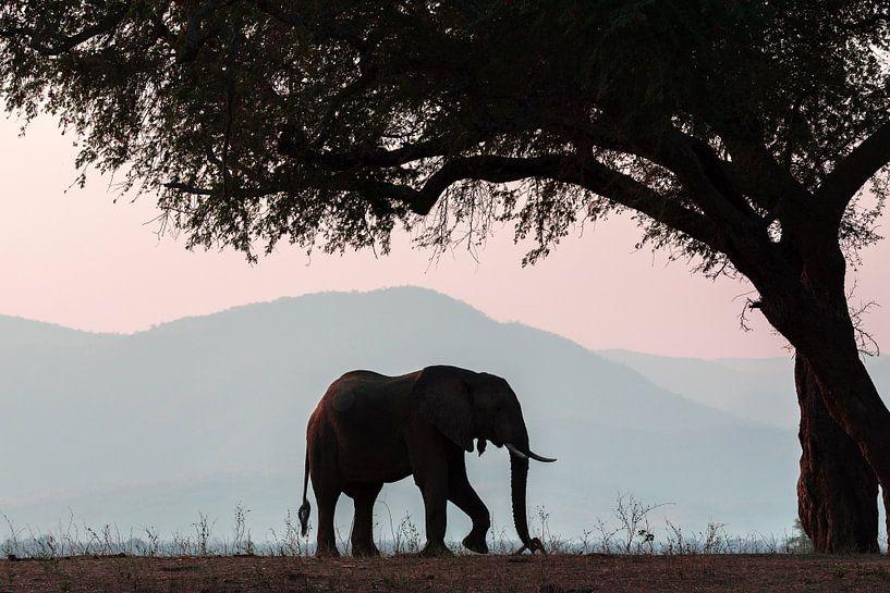 Olifant in Manapools (zimbabwe) van Gonda van Wijk
