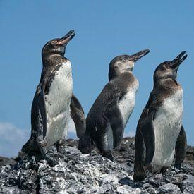 3 Galapagos pinguïns van Hanneke Bantje
