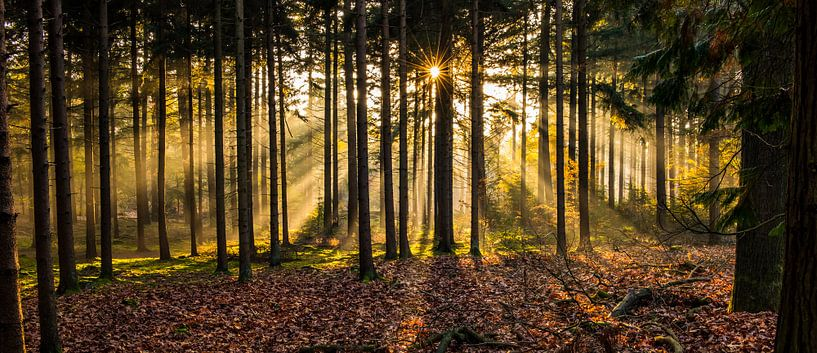 Herperduinen gouden zon door bos van Henk Verheyen