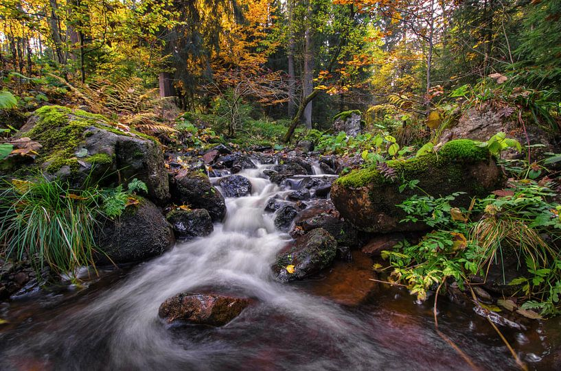 Herbst im Harz van Steffen Gierok