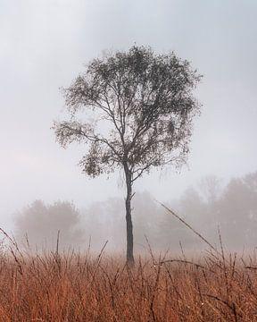 Eenzame boom in het Buurserzand van Jeroen Brasz
