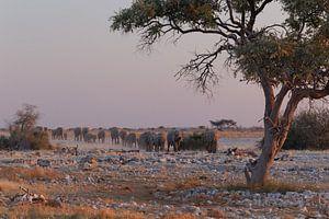 Olifanten Etosha National Park - Okaukuejo Water Hole