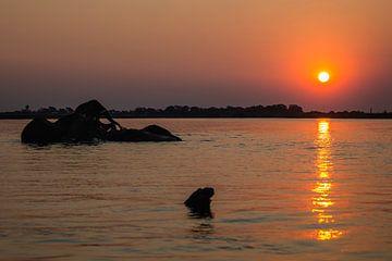 Olifanten bij zonsondergang in rivier (Chobe NP) van Henri Kok